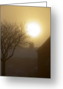 Natural Wolf  Greeting Cards - Winter Sun Greeting Card by Svetlana Sewell