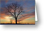 Pensive Greeting Cards - Winter Sunset Tree Greeting Card by John Stephens
