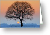 Bare Tree Greeting Cards - Winter Sunset With Silhouette Of Tree Greeting Card by Pierre Hanquin Photographie