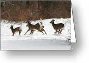 Natures Photos Greeting Cards - Winter Travel Greeting Card by Neal  Eslinger
