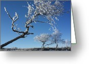 Snow Covered Greeting Cards - Winter tree. Greeting Card by Bernard Jaubert