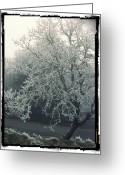 Pdx Art Greeting Cards - Winter Tree Greeting Card by Cathie Tyler