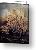 Winter Art Greeting Cards - Winter Tree Dark Greeting Card by Cathie Tyler