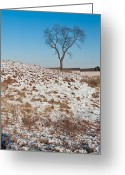 Prairie Greeting Cards - Winter Tree Nachusa Grasslands Greeting Card by Steve Gadomski