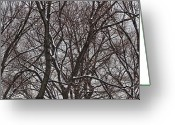 Winter Trees Greeting Cards - Winter Tree Panorama Greeting Card by Robert Ullmann