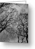 Winter Trees Greeting Cards - Winter Trees Greeting Card by Robert Ullmann