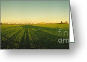 Winter Solstice Greeting Cards - Winter Wheat on the shortest day Greeting Card by Jan Faul