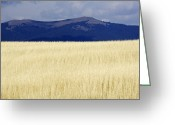 Snowy Range Greeting Cards - Winter Wheat Greeting Card by Will & Deni McIntyre