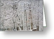 Whites Greeting Cards - Winter White Trees Greeting Card by Aimee L Maher