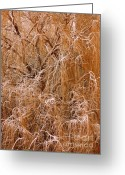 Braches Greeting Cards - Winter Willow Branches Greeting Card by Carol Groenen