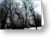 Metis Art Greeting Cards - Winter woods Greeting Card by Dan Daulby