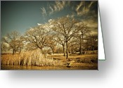 Winter Trees Greeting Cards - Winter World Greeting Card by Iris Greenwell