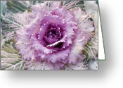 Designers Choice Photo Greeting Cards - Winters Blush Greeting Card by Don  Wright
