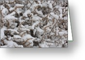 Tumbleweed Greeting Cards - Winters Contrast Greeting Card by Carol Groenen