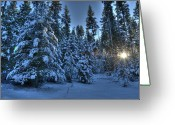 Winter Trees Greeting Cards - Winters glow Greeting Card by Peter Olsen