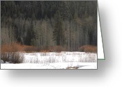 Snow On Field Greeting Cards - Winters Grip Greeting Card by Lydia Warner Miller