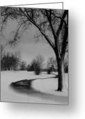Winter Trees Greeting Cards - Winters Path Greeting Card by David  Hubbs