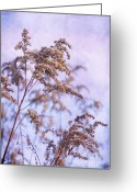 Pflanzen Greeting Cards - Wintertime Greeting Card by Angela Doelling AD DESIGN Photo and PhotoArt