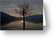 Sunset Light Greeting Cards - Wintertree In The Evening Greeting Card by Joana Kruse