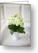 Vase Of Flowers Greeting Cards - Wintry Lovely Succulent Plant Flowered In Pot Greeting Card by Les Hirondelles Photography