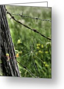 Barbed Wire Fences Photo Greeting Cards - Wired Greeting Card by JC Findley