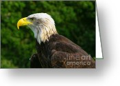 Mississippi County Greeting Cards - Wisconsin Bald Eagle Greeting Card by Tommy Anderson