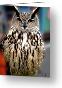 Colette Greeting Cards - Wise forest mountain Owl Spain Greeting Card by Colette Hera  Guggenheim