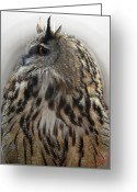 Colette Greeting Cards - Wise Forest Owl Alicante Region Spain Greeting Card by Colette Hera  Guggenheim