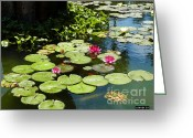 Santa Barbara Digital Art Greeting Cards - Wishes Among The Water Lilies Greeting Card by Methune Hively
