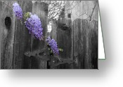 Selective Color Greeting Cards - Wisteria Greeting Card by Dylan Punke