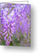 Georgia Greeting Cards - Wisteria Flowers In Bloom Greeting Card by Natalia Ganelin