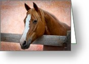 Quarter Horses Greeting Cards - With a Whisper Greeting Card by Doug Long
