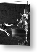 Feed Greeting Cards - With Bells On - bw Greeting Card by Linda Knorr Shafer