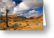 Sandstone Bluffs Greeting Cards - Withered Greeting Card by Mike  Dawson