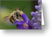 Beautiful Purples Greeting Cards - Without Me  Greeting Card by Steven Milner