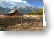 Teton National Park Greeting Cards - Withstanding The Test Of Time Greeting Card by Sandra Bronstein