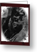 Beautiful Face Wolf Greeting Cards - Wolf Black And White Designer Greeting Card by Debra     Vatalaro