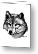 Wolves Drawings Greeting Cards - Wolf in pencil Greeting Card by Nick Gustafson