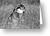 White Wolf Pyrography Greeting Cards - Wolf in the Grass Greeting Card by Kyle Gray