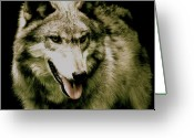 Beautiful Face Wolf Greeting Cards - Wolf Of The Night Greeting Card by Debra     Vatalaro