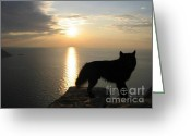 Autumn Photographs Greeting Cards - Wolf Sunset Greeting Card by Paul Baker