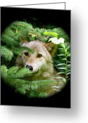 Playful Wolves Greeting Cards - Wolf Thick Of The Woods Greeting Card by Debra     Vatalaro
