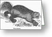 Wolverine Greeting Cards - Wolverine, 1873 Greeting Card by Granger