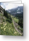 Hikers And Hiking Photo Greeting Cards - Woman Hiking On Sperry Chalet Trail Greeting Card by Skip Brown