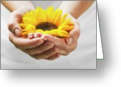 Human Hand Greeting Cards - Woman Holding A Sunflower Bloom In Cupped Hands. Greeting Card by Chris Stein