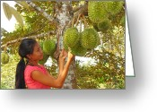 Durian Greeting Cards - Woman Inspecting Durian Fruit Greeting Card by Bjorn Svensson