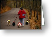 Four Animals Greeting Cards - Woman Walks Her Army Of Dogs Dressed Greeting Card by Raymond Gehman