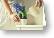 Indoors Greeting Cards - Woman Watering Blue Hyacinth Greeting Card by Photo by Ira Heuvelman-Dobrolyubova