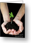 Beginnings Greeting Cards - Womans hands holding seedling Greeting Card by Sami Sarkis
