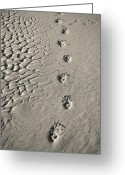 Footprint Greeting Cards - Wombat Footprints On Deserted Beach Greeting Card by Peter K Leung